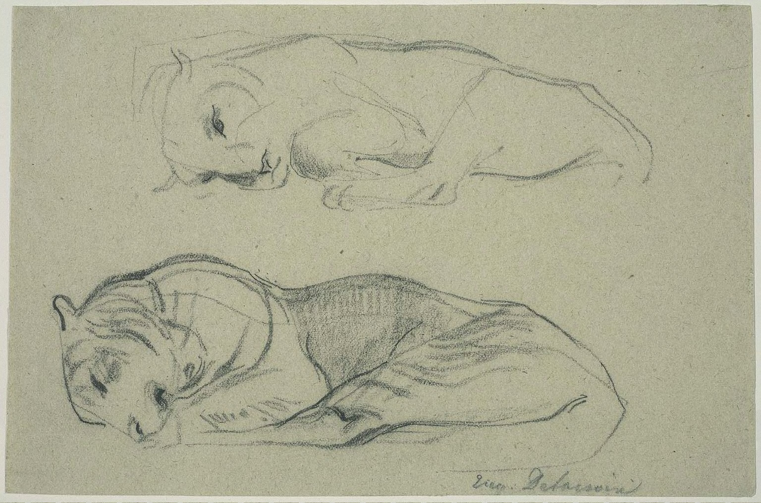 Studies of a Sleeping Lioness